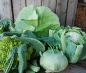 La Boite à Herbes - 4 Choux De Saison - 5kg