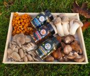 Les champignons du Loc'h - Grand Panier Champigourmand