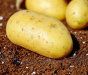 Le Châtaignier - Pommes De Terre Charlotte - 15kg