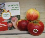Le Châtaignier - Pommes Elstar - Colis 5kg