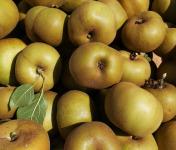 Didier Goubet - Pommes Reinettes grises BIO de La Drôme - 8 Kg