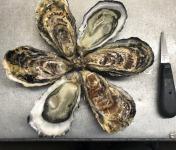 Les Huîtres Chaumard - Huitres De Saint-Riom - 36 Numéro 1