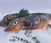 Côté Fish - Mon poisson direct pêcheurs - Grondins 500g