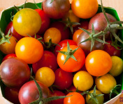 Le Jardin des Gallines - Tomates Cerises En Mélange De Couleur Bio