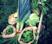 Ferme Sinsac - Panier de legumes variés Bio - 5 kg
