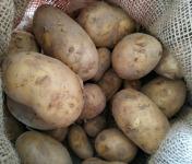 Au champ bio - Pomme de Terre Bernadette Bio - 5kg