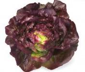 Le Jardin des Gallines - Salade Laitue Rouge Bio