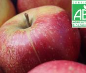 Mon Petit Producteur - Pomme Pinova Bio - 1kg