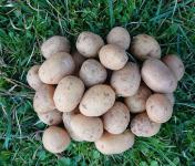 La Ferme Boréale - Pommes De Terre Agata Calibre Grenaille - 5kg