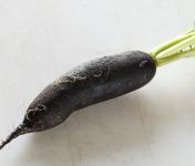 Le Jardin des Gallines - Radis Noir Long - Pièce