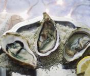 Les Huîtres Courdavault Alain & Fils - Offre Pro: 15 Kg Fines Calibre 4 - 240 Huîtres