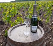 Champagne Deneufchatel - Champagne Deneufchatel Millésime 1 X 75 Cl