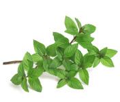Les Herbes du Roussillon - Menthe Poivrée Fraîche