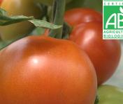 Mon Petit Producteur - Tomate Ronde Bio Paola [vendu Par 1kg]