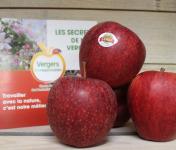 Le Châtaignier - Pommes Gala - Colis 5kg