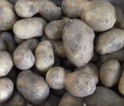 Multiproductions - Cédric Joliveau - Pomme De Terre Agria 1kg