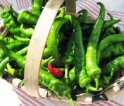 Elissalde Le Potager Basque - 6 Plants de Piment du Pays Basque ULTRA-DOUX - 100% Naturel