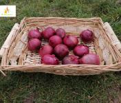 Au bon Jardinet - Oignons Rouges Karmen X 1kg