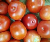 Les Jardins de Valojoulx - Tomates Ronde Rouge