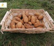 Au bon Jardinet - Pomme De Terre Amandine 1kg