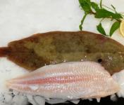 Pêcheries Les Brisants - Ulysse Marée - Sole - Prête A Cuire - Lot De 1kg
