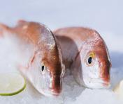 Côté Fish - Mon poisson direct pêcheurs - Pageots 500g
