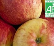 Mon Petit Producteur - Pomme Gala Bio - 3kg