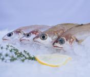 Côté Fish - Mon poisson direct pêcheurs - Capelans 1000g