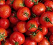 Le Châtaignier - Tomates Rondes Pleine Terre - Colis 5kgs