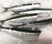 Pêcheries Les Brisants - Ulysse Marée - Sardine Bretonne Fraîche - Étêtée Vidée - 1kg