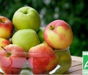 Le Châtaignier - Pommes Bio - Assortiment 14 Kg