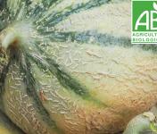 Mon Petit Producteur - Melon Céleste [ Poids Moyen 850g ]