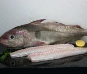 Pêcheries Les Brisants - Ulysse Marée - Dos d'Eglefin - Pelé - Lot de 1kg