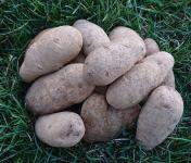 La Ferme Boréale - Pommes De Terre Agata Calibre 55-75 - 3kg