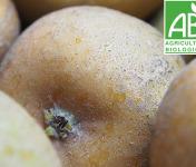 Mon Petit Producteur - Pomme Patte De Loup - 1kg