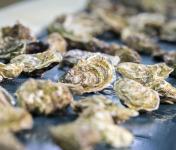 Les Huîtres Chaumard - Huîtres De Saint-Riom N°4 - Bourriche De 12 Pièces (1 Douzaine)