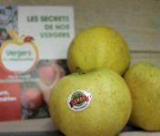 Le Châtaignier - Pommes Chantecler - Colis 14 Kg