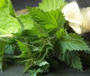 La Boite à Herbes - Ortie Piquante Bio