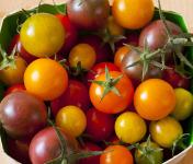 Le Jardin des Gallines - Tomates Cerises Couleurs