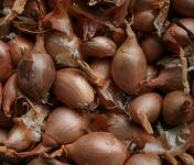 Le Jardin des Gallines - Oignons Jaunes, 1 Kg