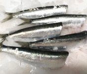 Pêcheries Les Brisants - Ulysse Marée - Sardine Bretonne Fraîche - Étêtée Vidée - 500g