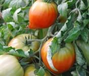 La Boite à Herbes - Tomate Cœur De Bœuf Biologique - 1kg