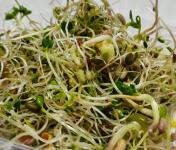 Les Jardins du Mas de Greil - La Vitaminée Des Jardins