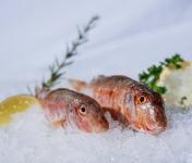 Côté Fish - Mon poisson direct pêcheurs - Rouget