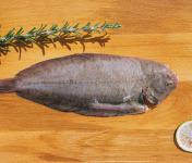 Côté Fish - Mon poisson direct pêcheurs - Sole