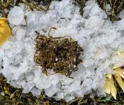 Thaëron - Haricots de mer - Barquette de 125 g