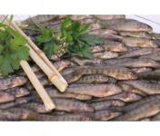 Ma-  poissonnière - Friture De Truite - Lot De 2 Kg