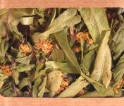 Les Jardins du Mas de Greil - Tilleul-menthe, Tisane Composée