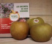 Le Châtaignier - Pommes Reinette Grise du Canada - 1kg