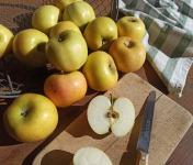 Le Verger de Crigne - Pommes Chantecler Bio (petit Calibre) - 10kg